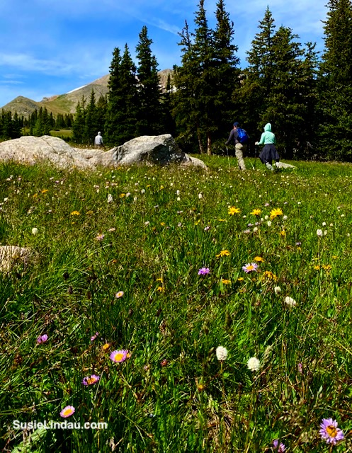 Meadow in Indian Peaks