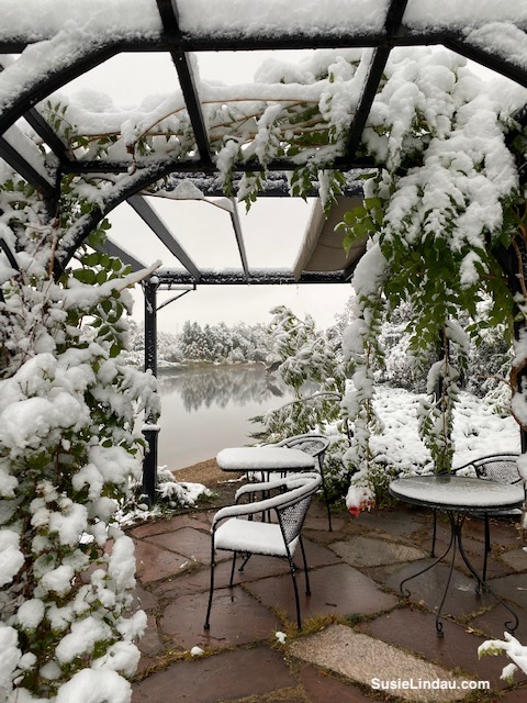 Snowy trellis at the pond