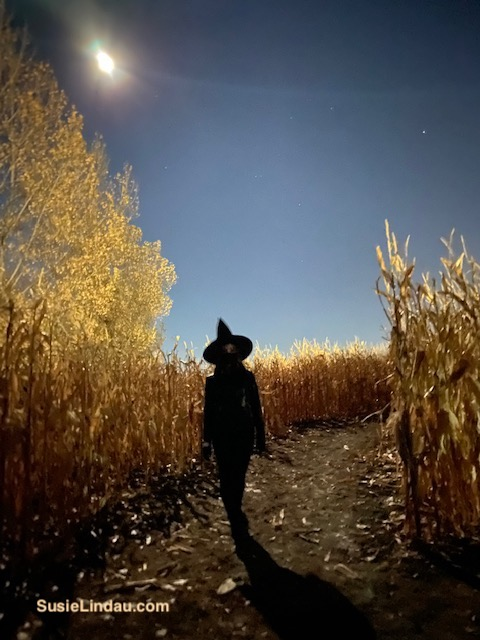 Halloween Witch in a cornfield