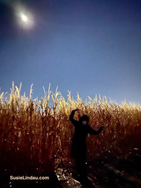 Spooky cornfield under a full moon