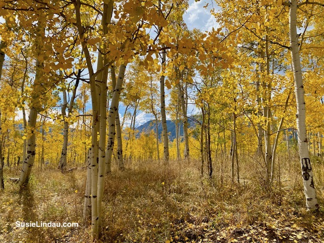 The mountain peeks seen between the aspens in Crested Butte